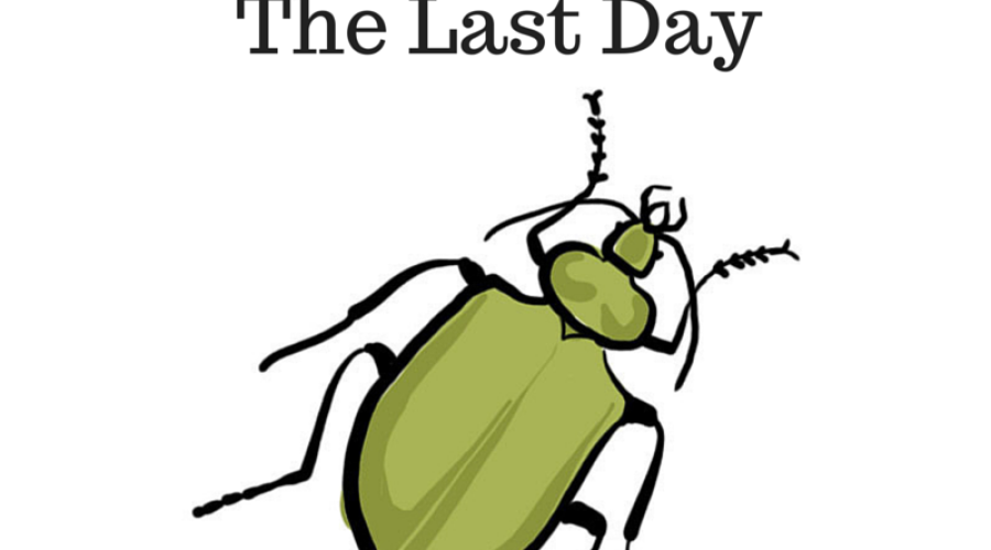 A Beetle Reminded me of the Last Day
