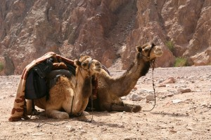 Difficulty & Reward in the Last Days – Shaykh Hisham Kabbani